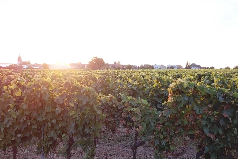 Wine App Startup