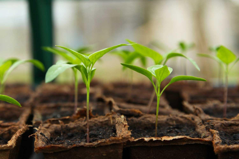 Home vertical farm - Plant Cube