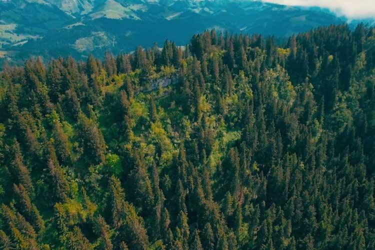 Vegetation Intelligence Startup