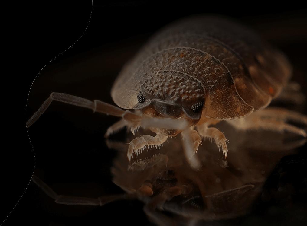 bedbug removal services