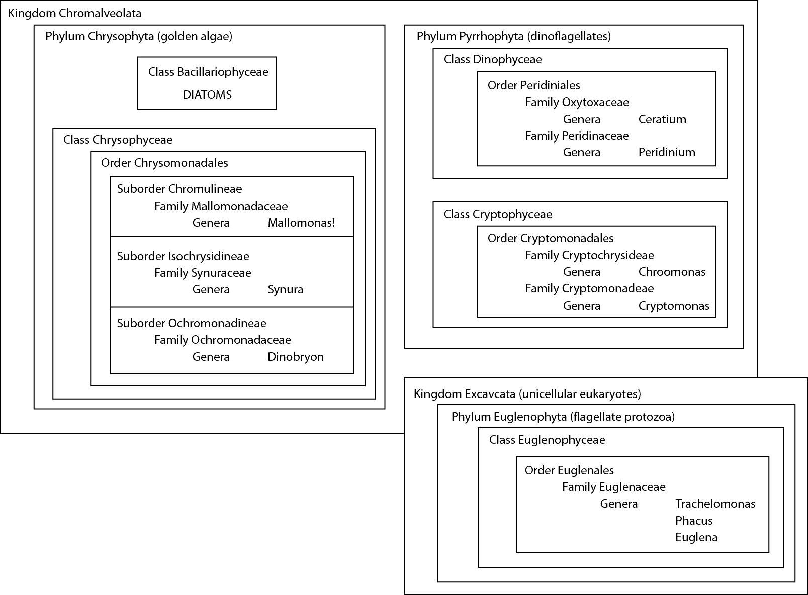 Taxonomy diagram of different phytoplankton
