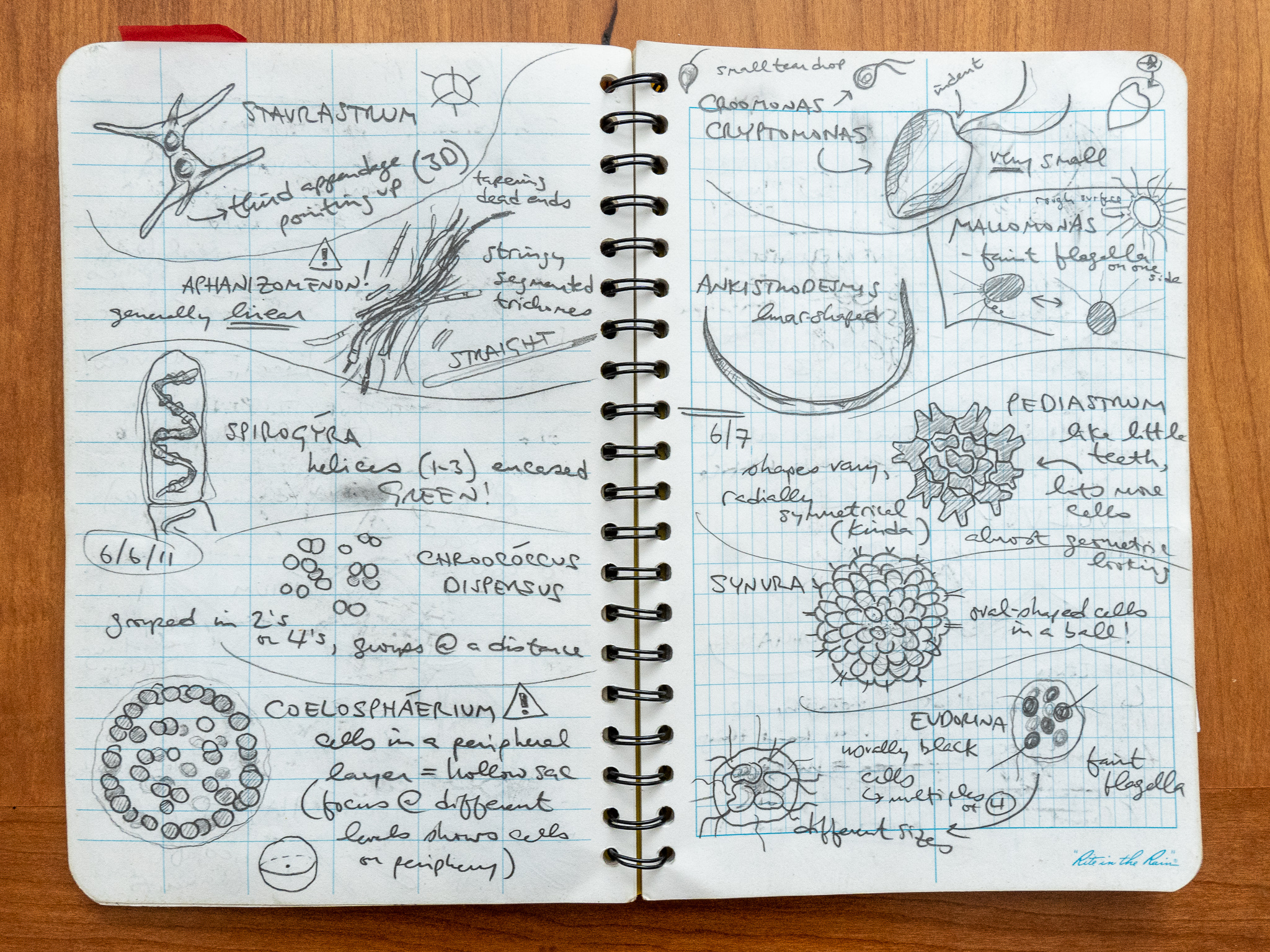 Photo of an open journal with handwritten notes and drawings