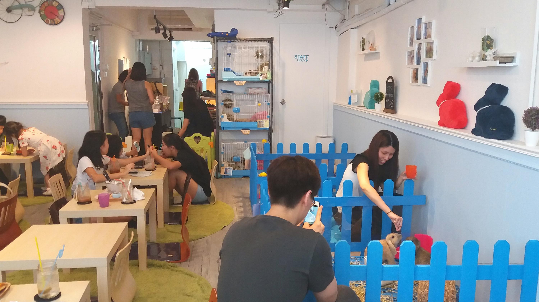 Pet cafe Hong Kong