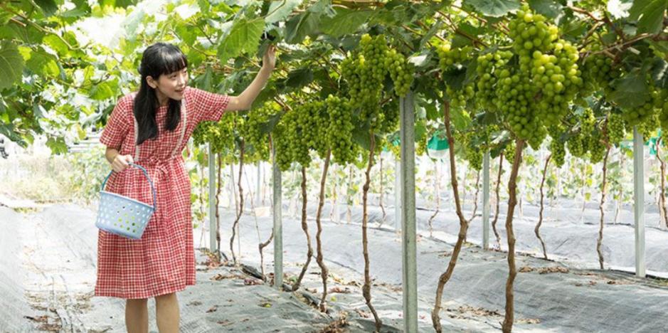 Long Ping Strawberry Farm Hong Kong