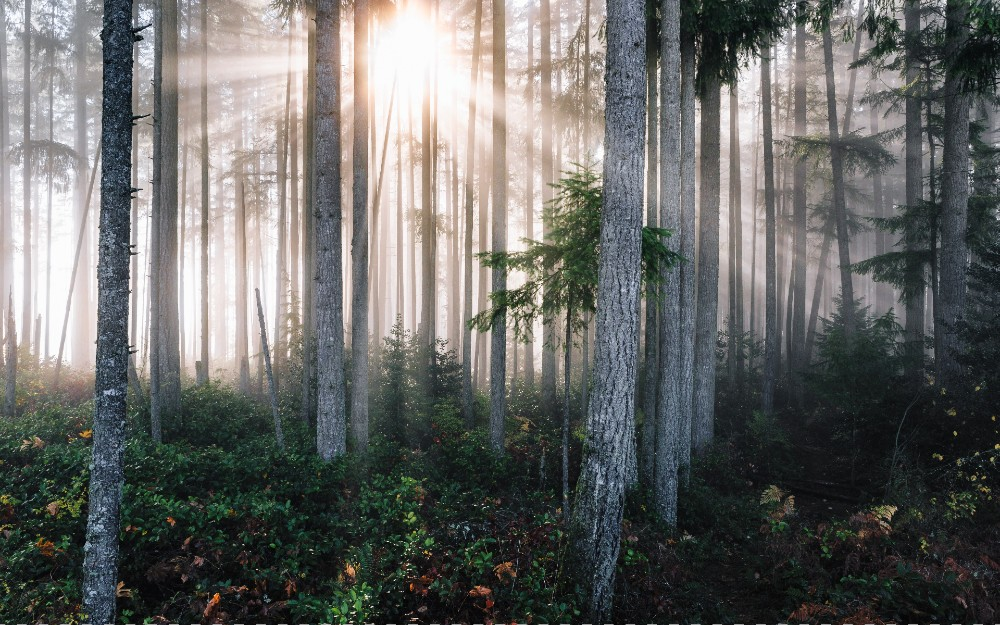 sun visible through forest trees