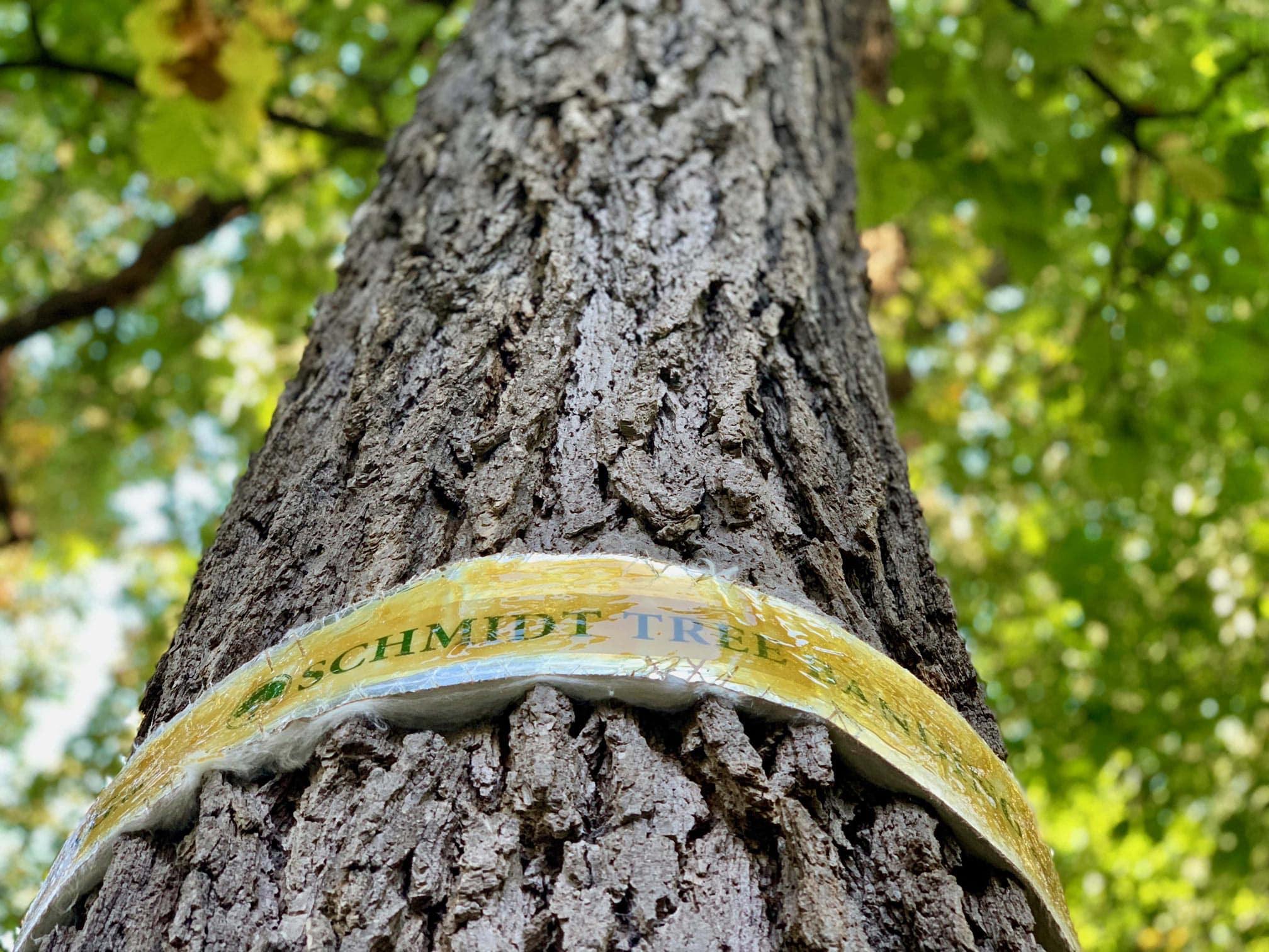 Tree band on tree