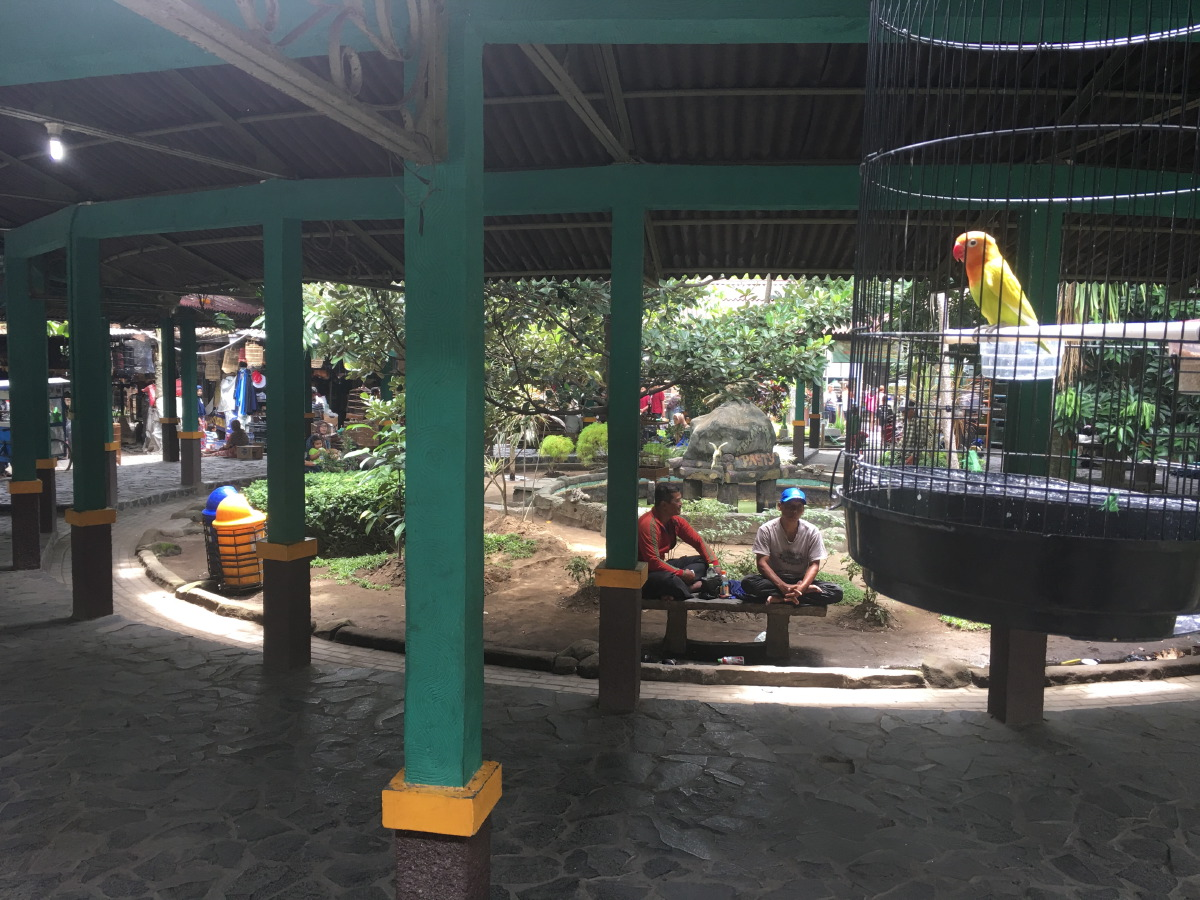 The Kraton Bird Market. There are not just birds for sale here, but also a wide variety of reptiles and all sorts of pets including cats and dogs.
