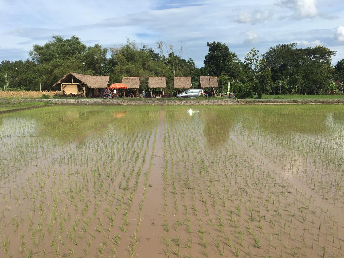 Peaceful life along the rice paddies