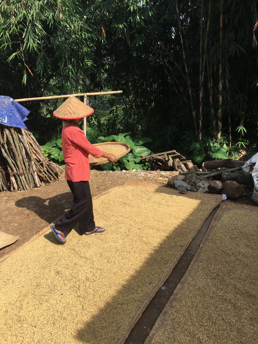 Rice sifting is still done by hand here, a wonderful craft using weight and wind to sift the dried chaff from the grains.