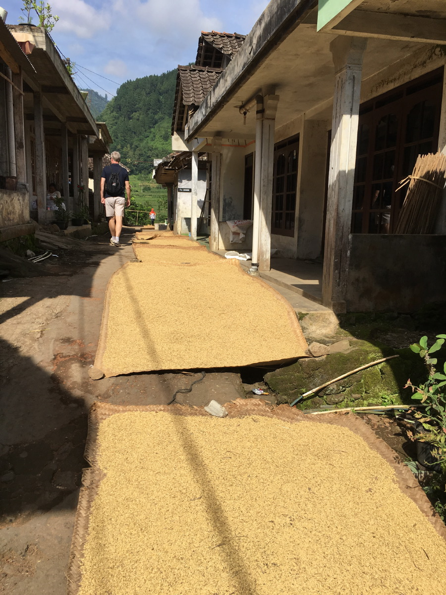 Freshly harvested rice drying on mats in the sun.