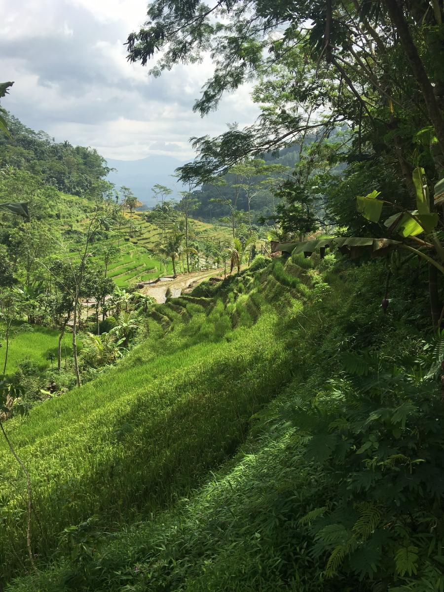 Hiking to Candi Selogriyo