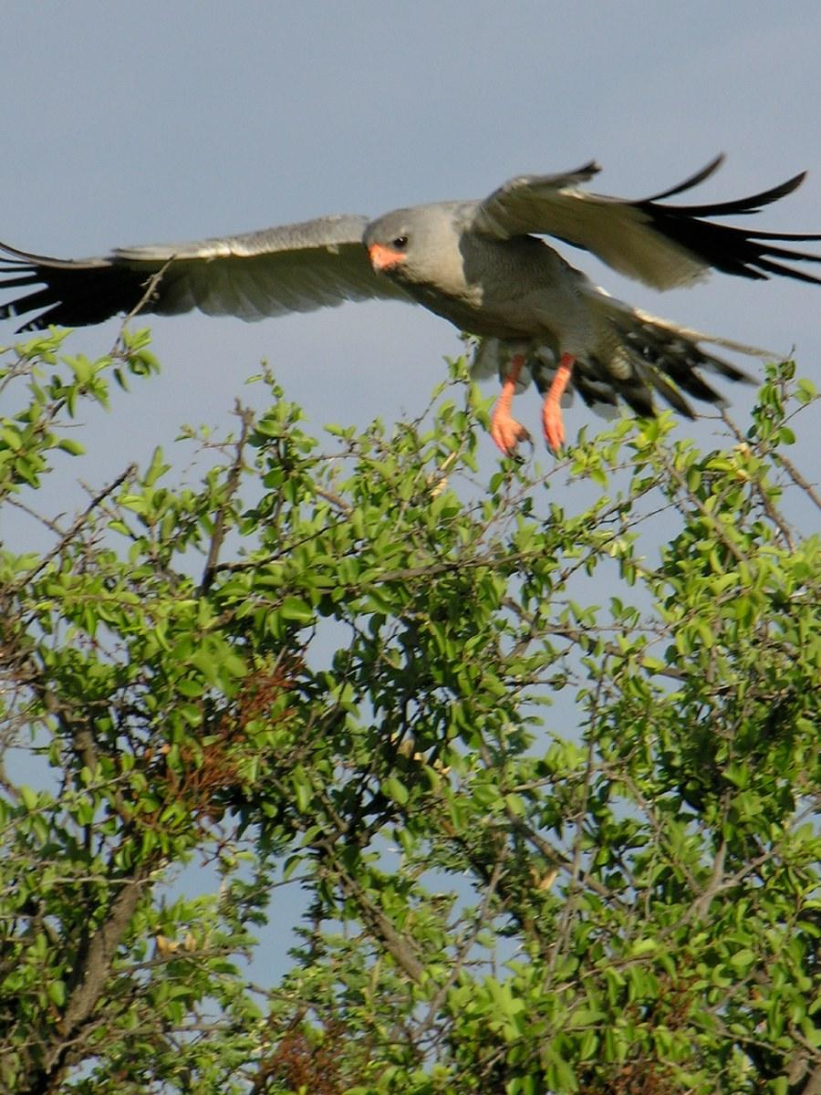 Bird of prey in motion