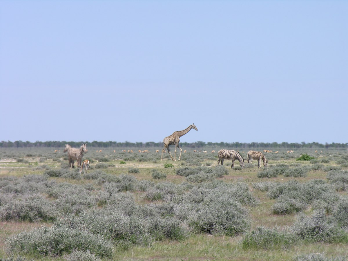 Many different species live peacefully together on the vast plains of Etosha