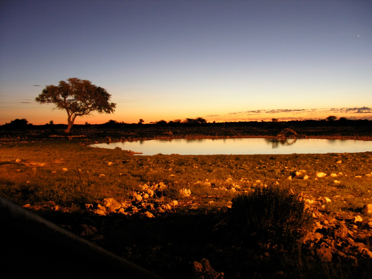 A few steps away from our small bungalow was a manmade water hole where animals gather 'round sunrise and sunset. Here we saw a black rhino, but unfortunately it was already too dark to get it on camera...