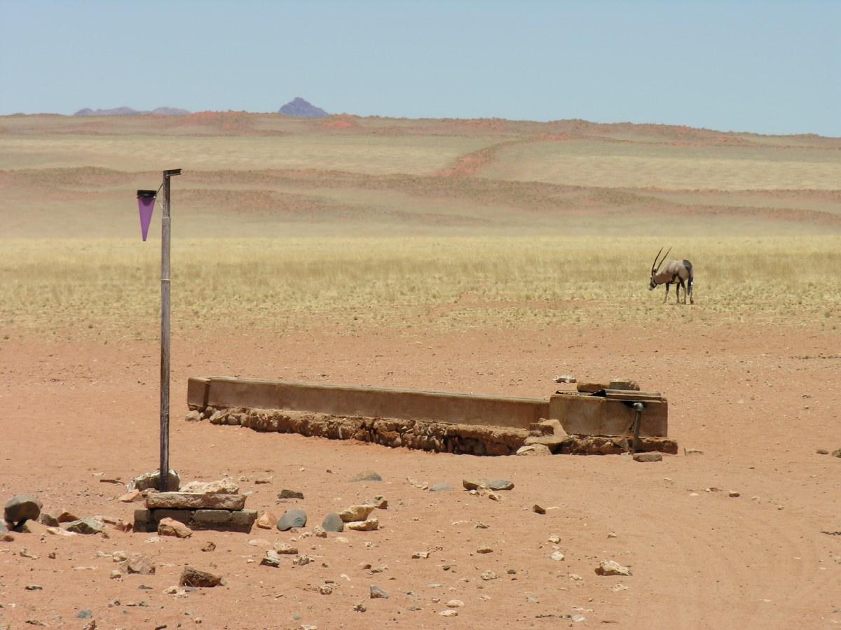 Gemsbok near water basin