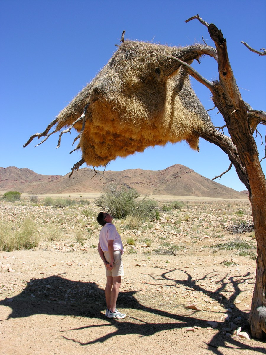 José inspects weaver nest