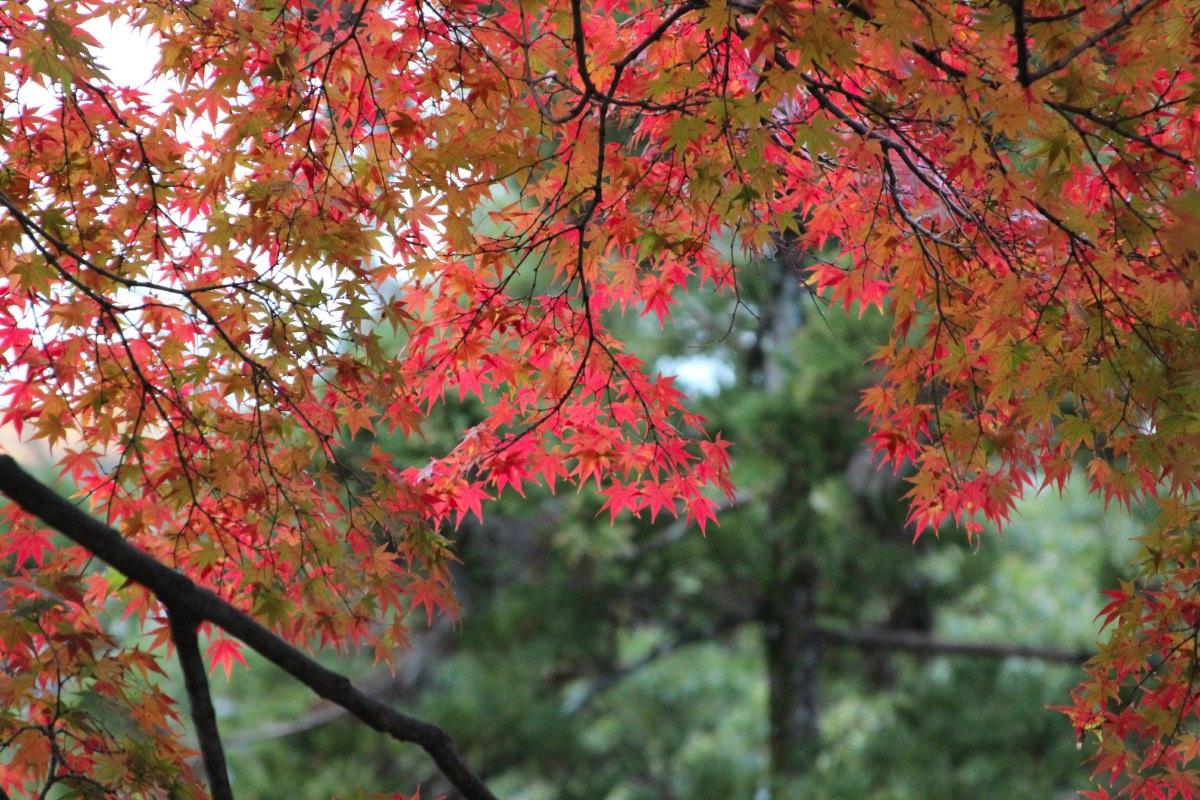 Autumn colours everywhere