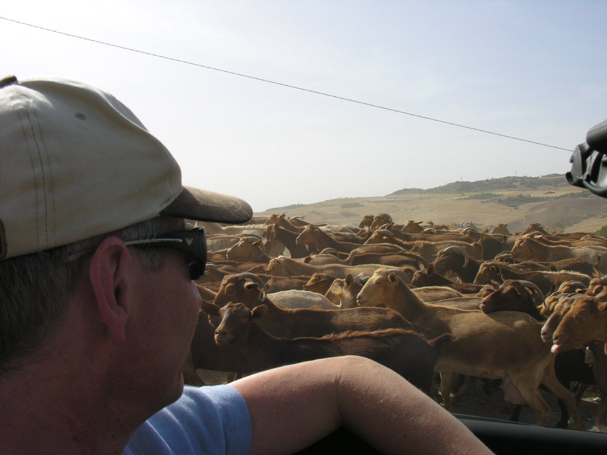 Touring through Andalucía. Every now and then we had to stop for animals crossing our path...
