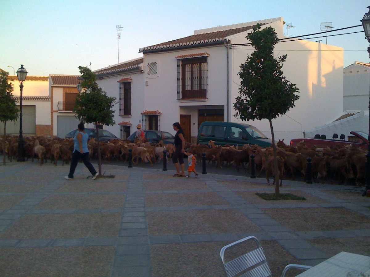While having dinner in the tiny town of La Joya, a herd of goats pass us on their way home.