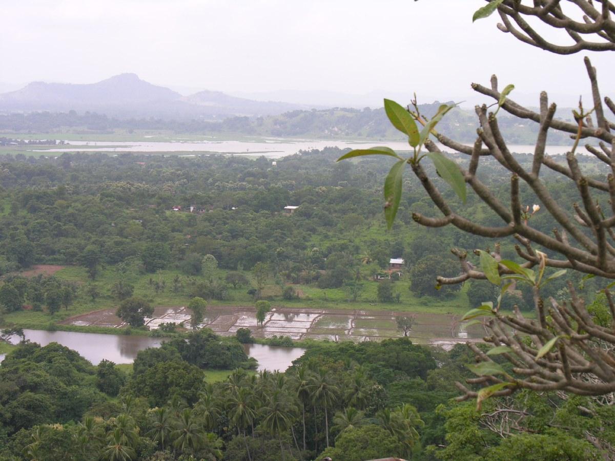 Dambulla mountain view