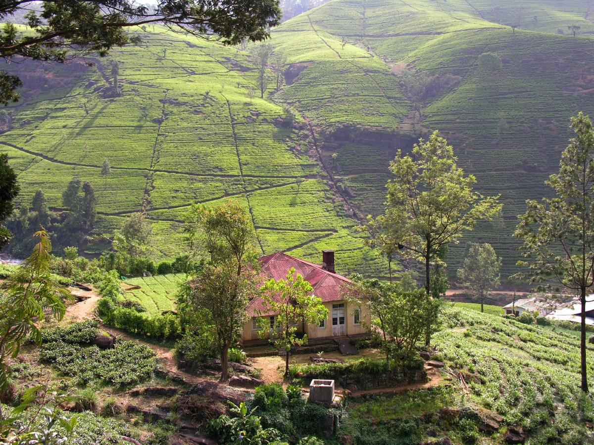 Nuwara Eliya countryside