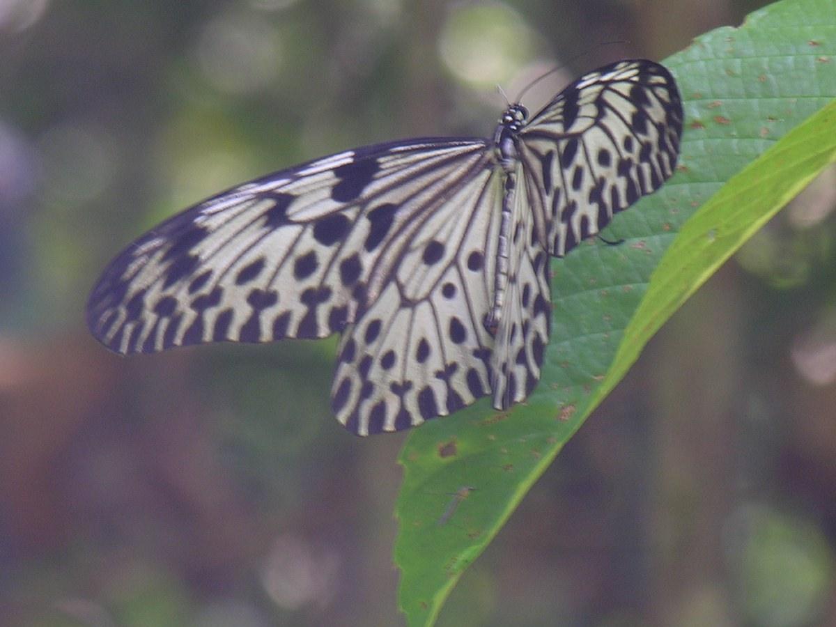 Sinharaja Rainforest Reserve