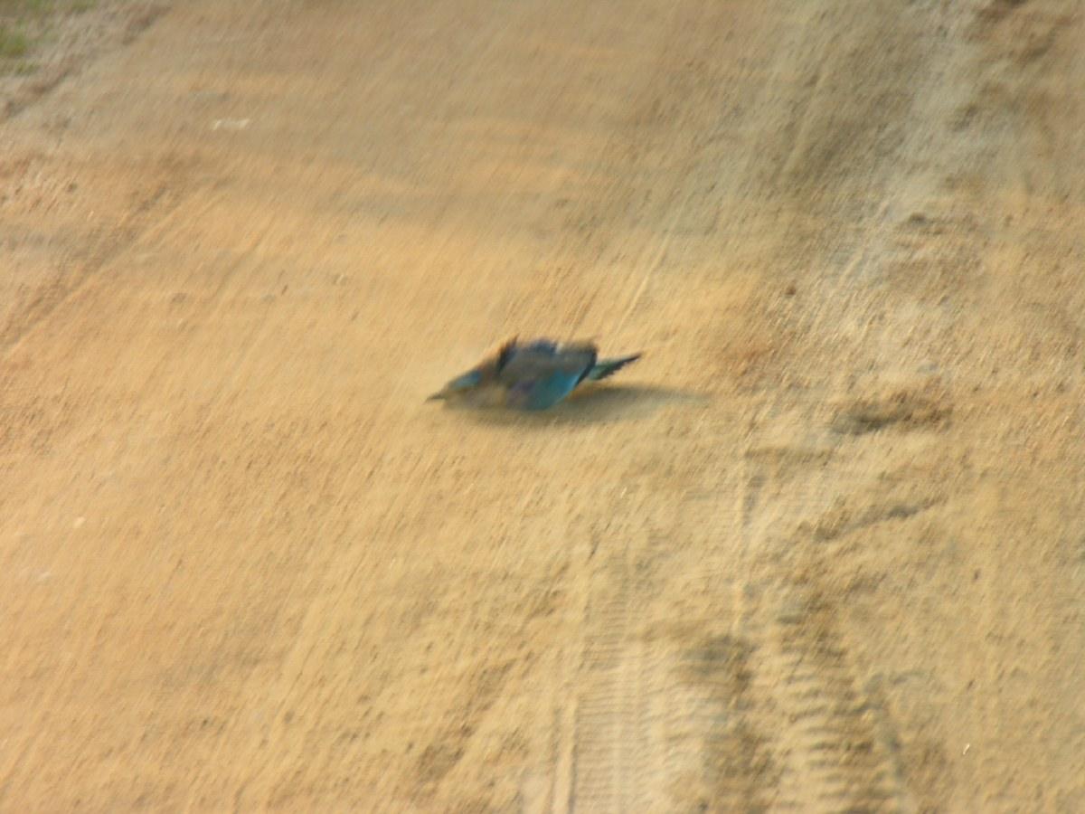 Sandwashing bird