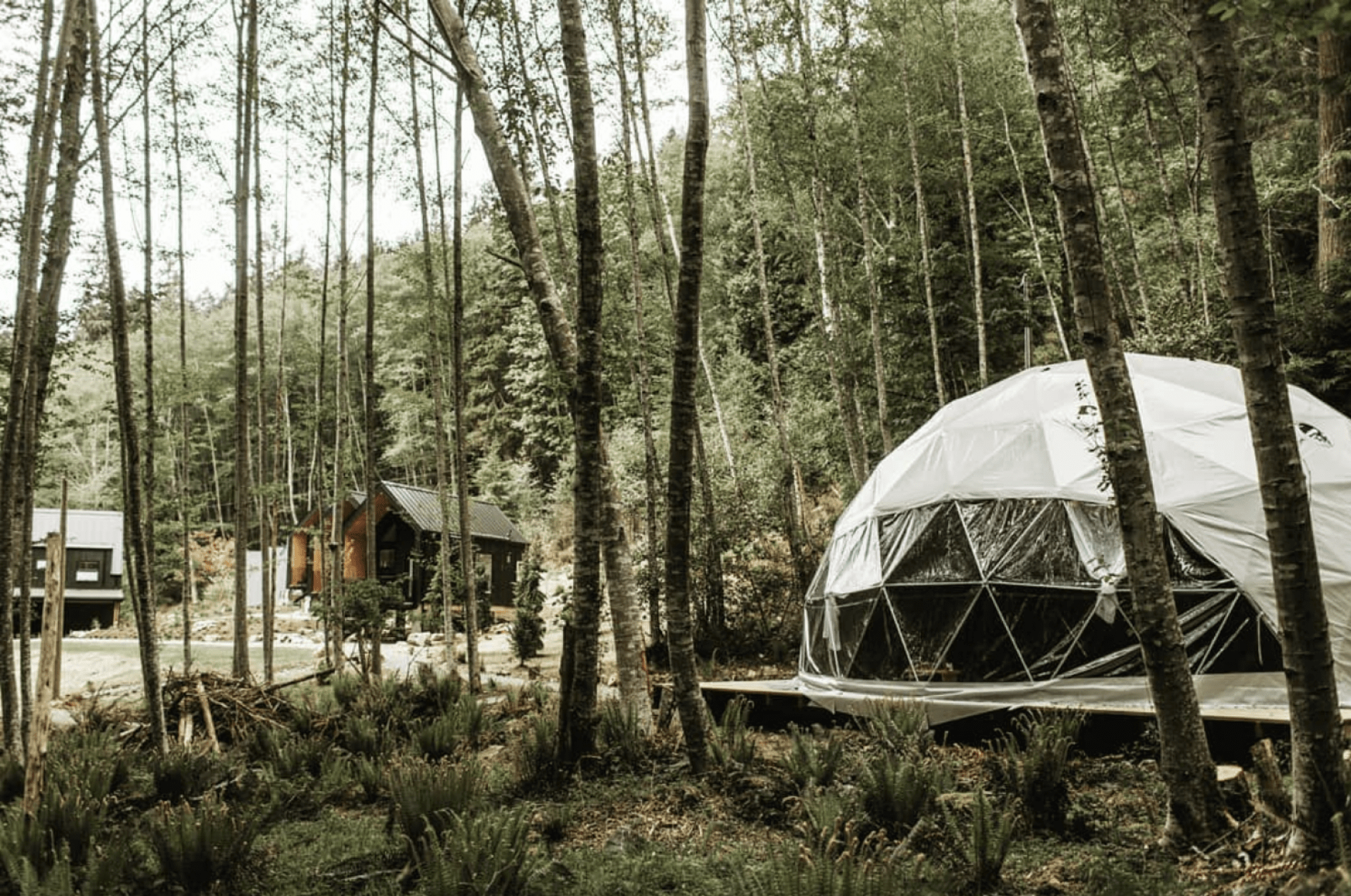 Dome tent in woods