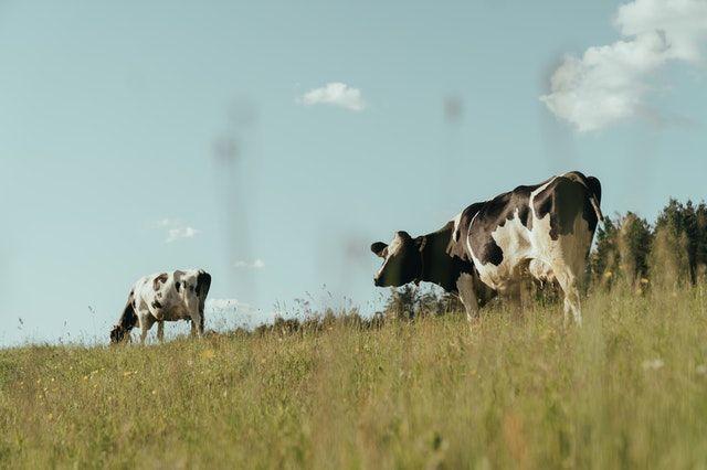 Hosted Desktops for Dairy Farmers