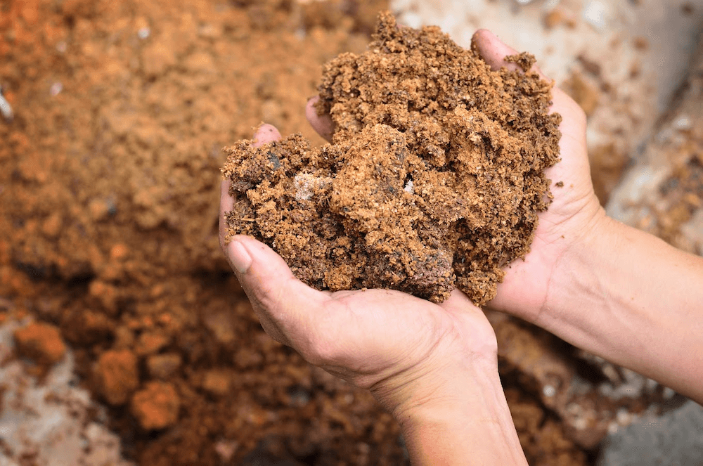 Hands holding dirt from the ground