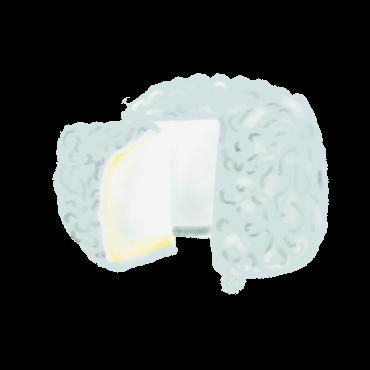 Goat Cheese Illustration