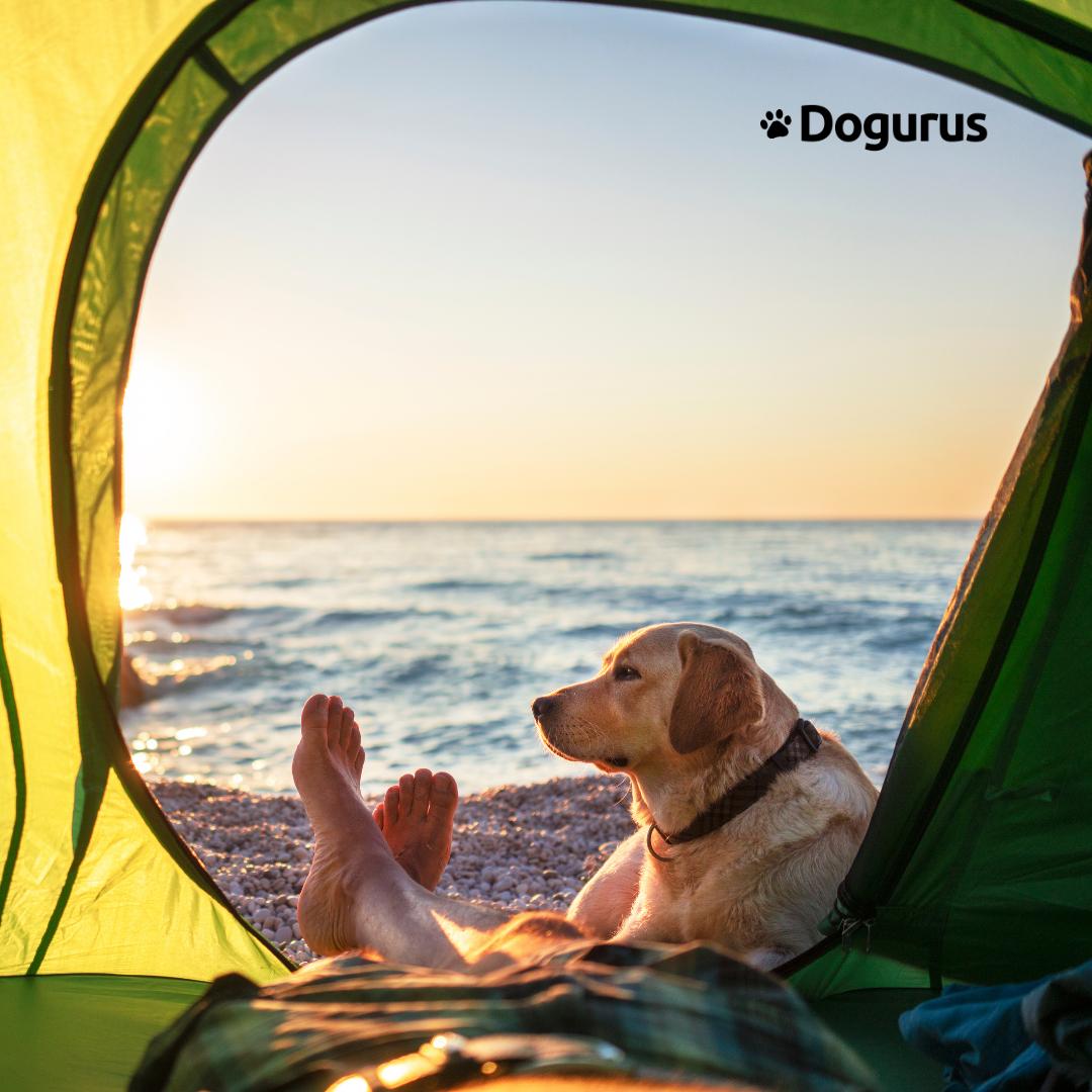Dog and Dog Dad at the beach