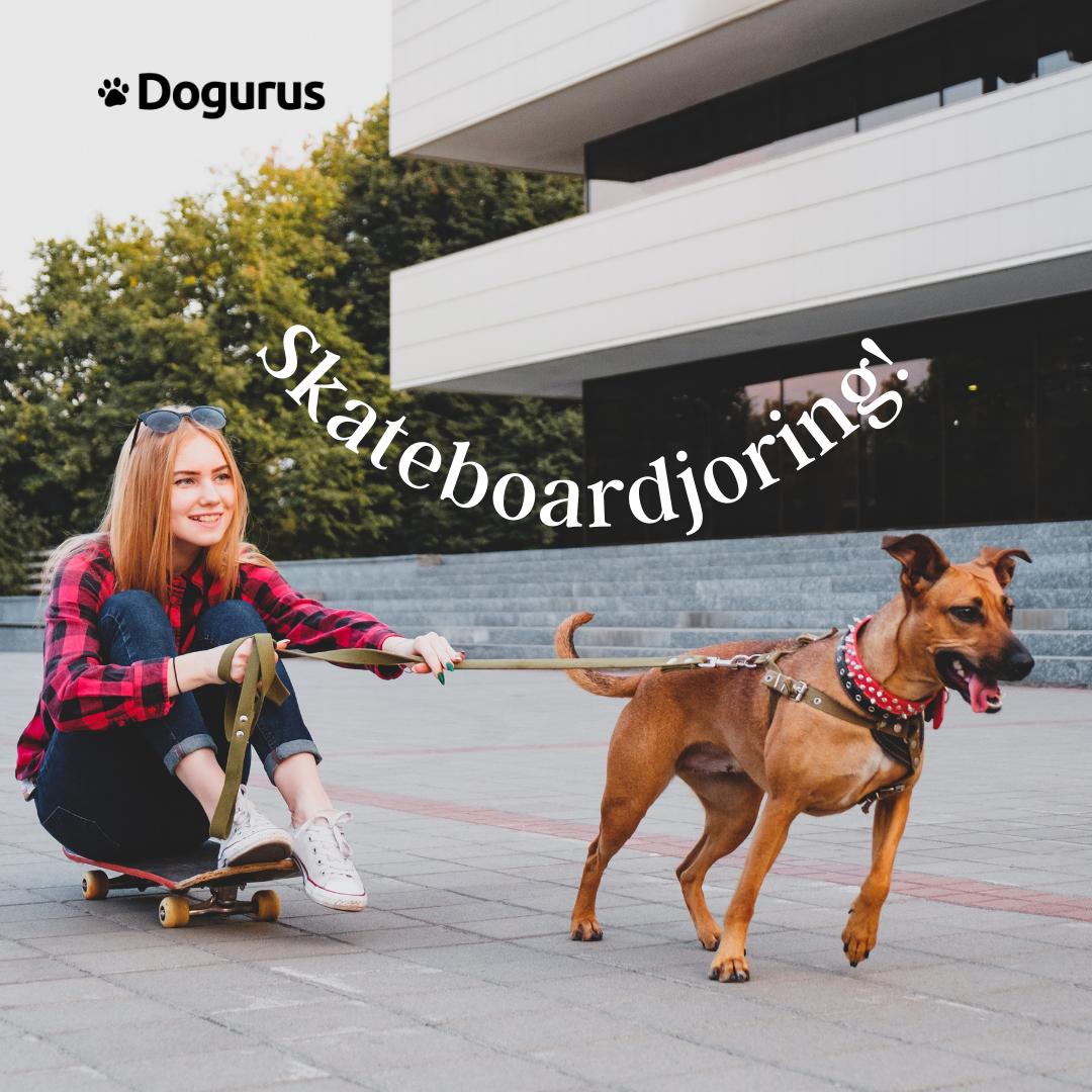 Dog and Owner Skateboardjoring
