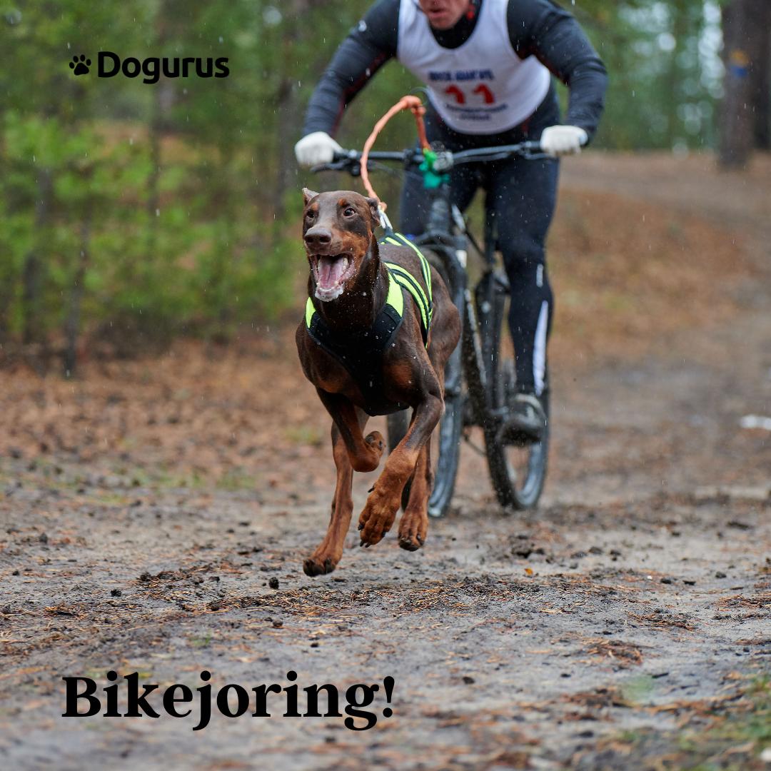 Dog And Owner Bikejoring