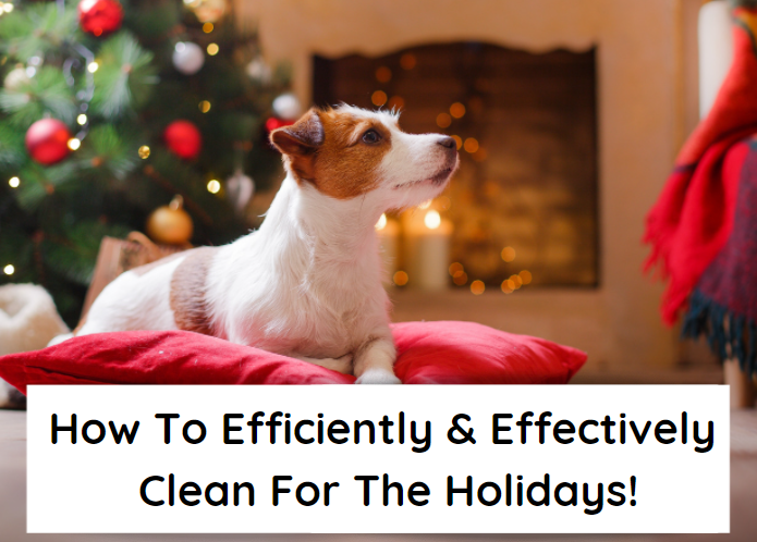 How To Efficiently & Effectively Clean For The Holidays With Dogs