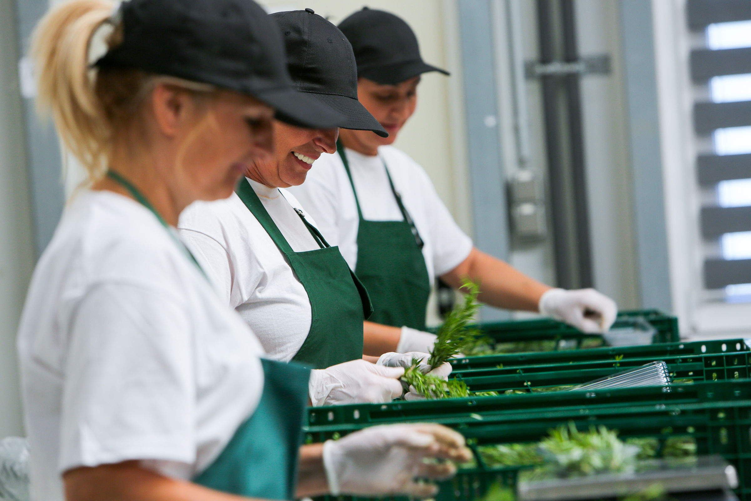 workers sorting herbs