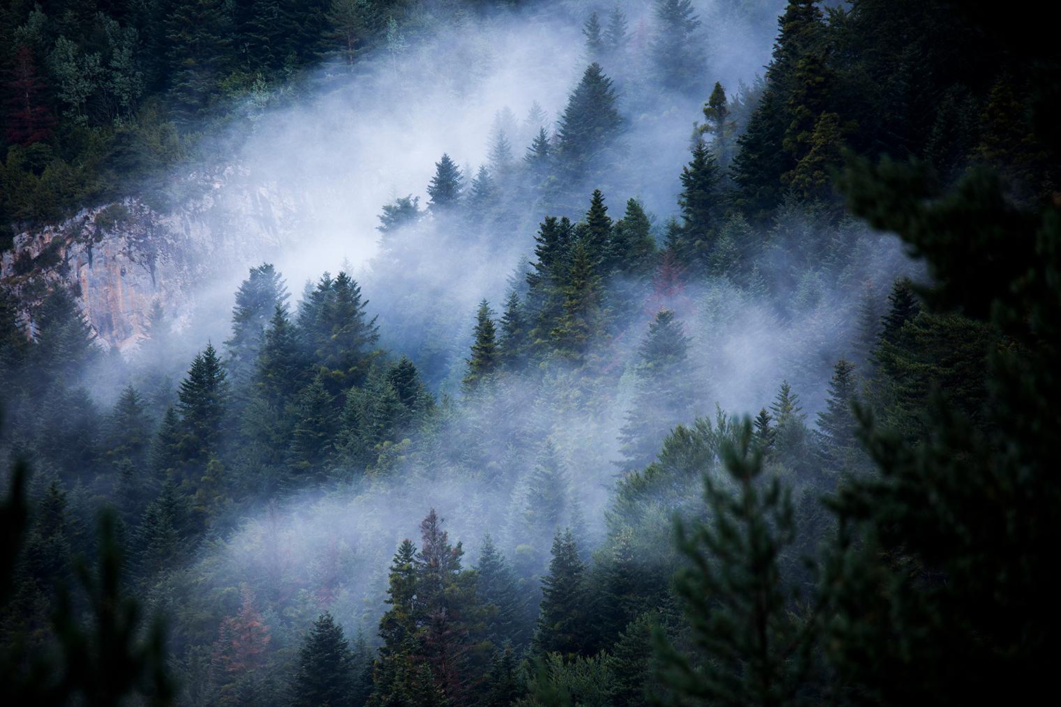 Niebla cubriendo un bosque