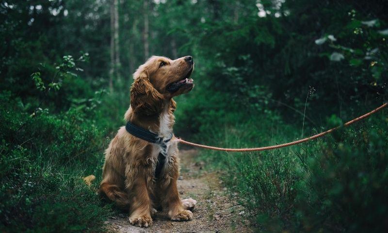 A dog sitting on a path