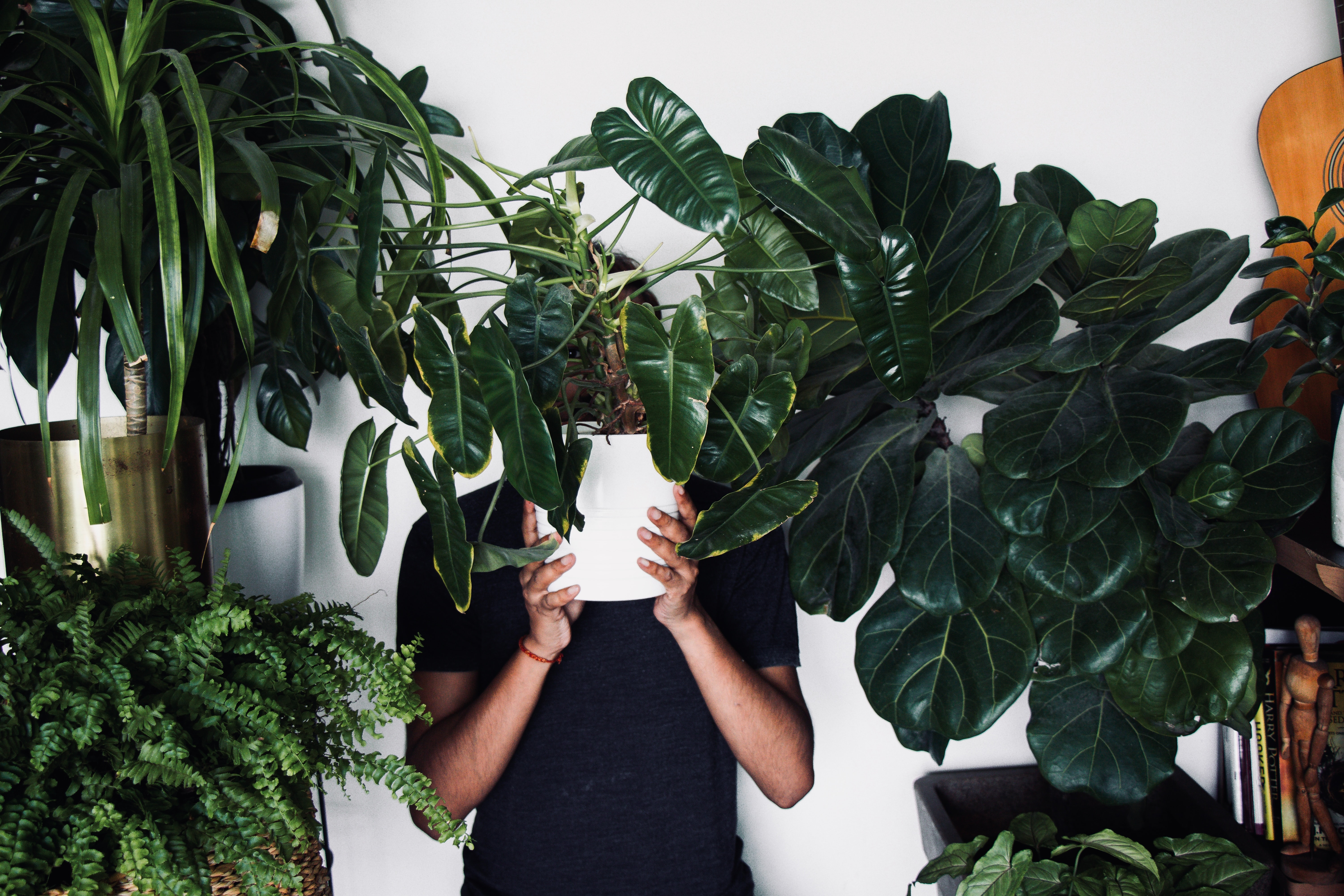 Man holds houseplant in front of face