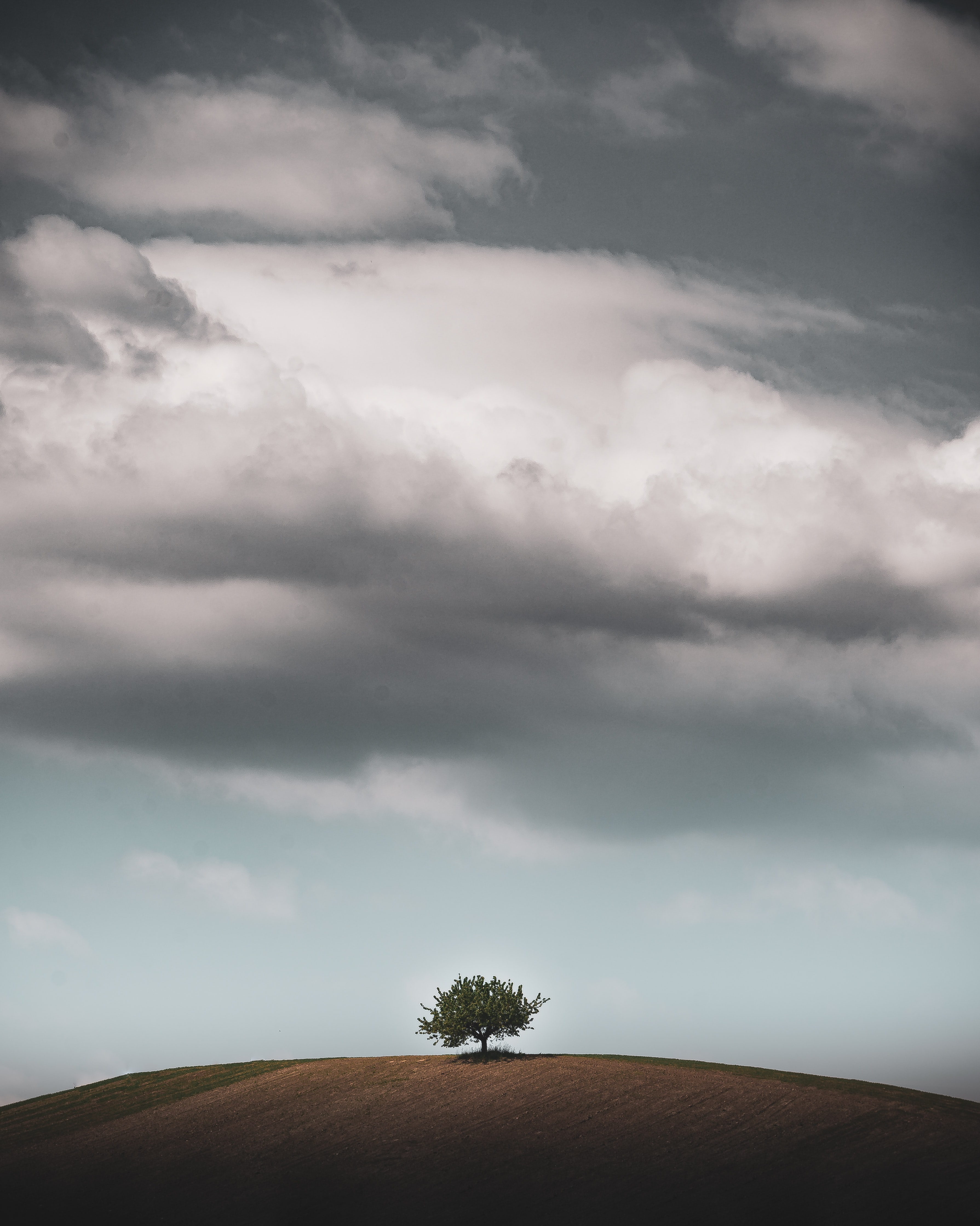 Lone tree stands on hill with dark skies above