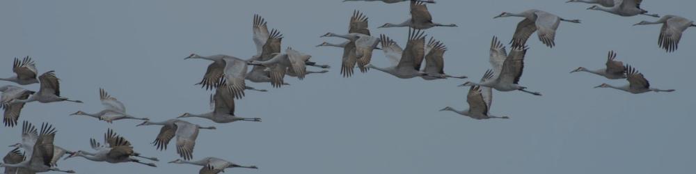 Piesync migrieren Zapier & Integromat