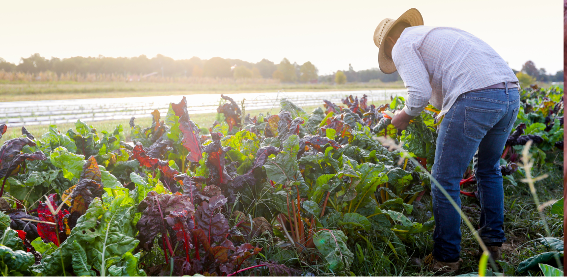 Photo of farmer watering vegiies at Barr Farms for those interested in farms near me, organic farms near me, local farms near me