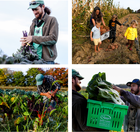 Collection of four images of farmers from Barr Farms near Louisville Kentucky. The top left photo is Adam of Barr farms holding  Kale. Top right image is the Barr Farms family holding sweet potatoes. Bottom right image is a farmer picking Kale on the farm in Rhodelia Kentucky.  The bottom right is of two farmers packing Kale into a green bin.