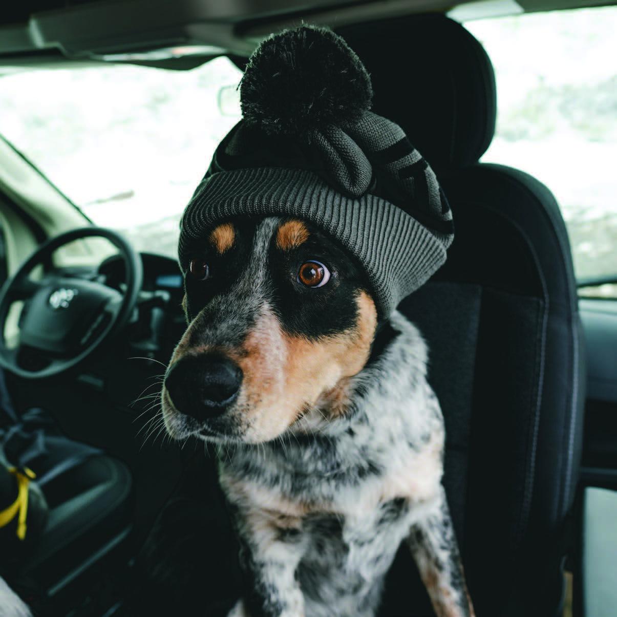 dog wearing a mountain standard beanie like a good boy, brent
