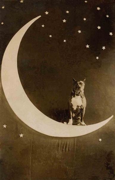 Feline Sun, Canine Moon