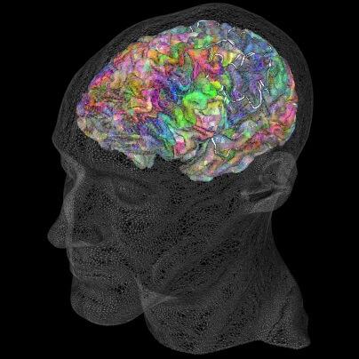 Atlas Semântico do Cérebro
