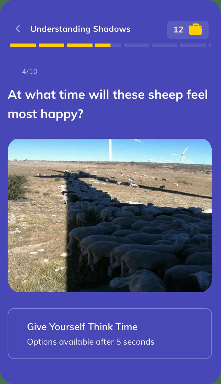 sheep under shadow