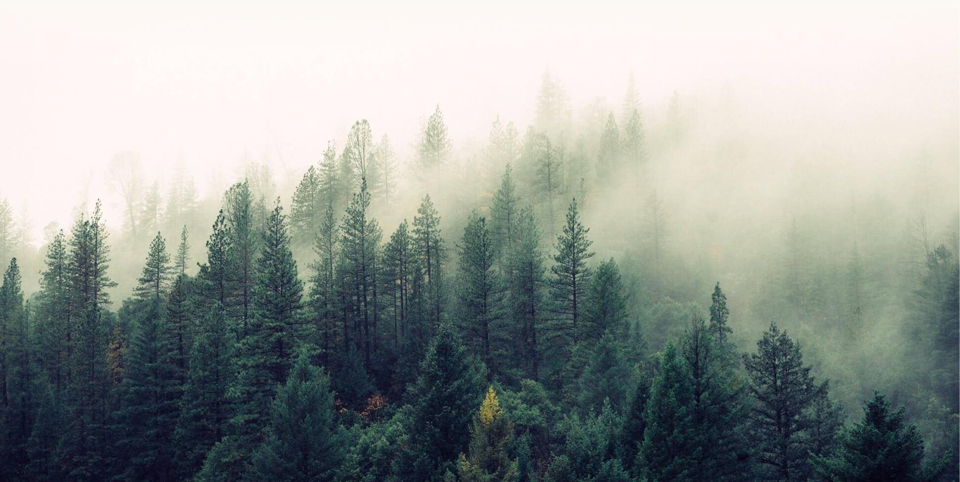 A misty green forest landscape.