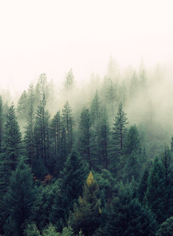 A misty green forest.