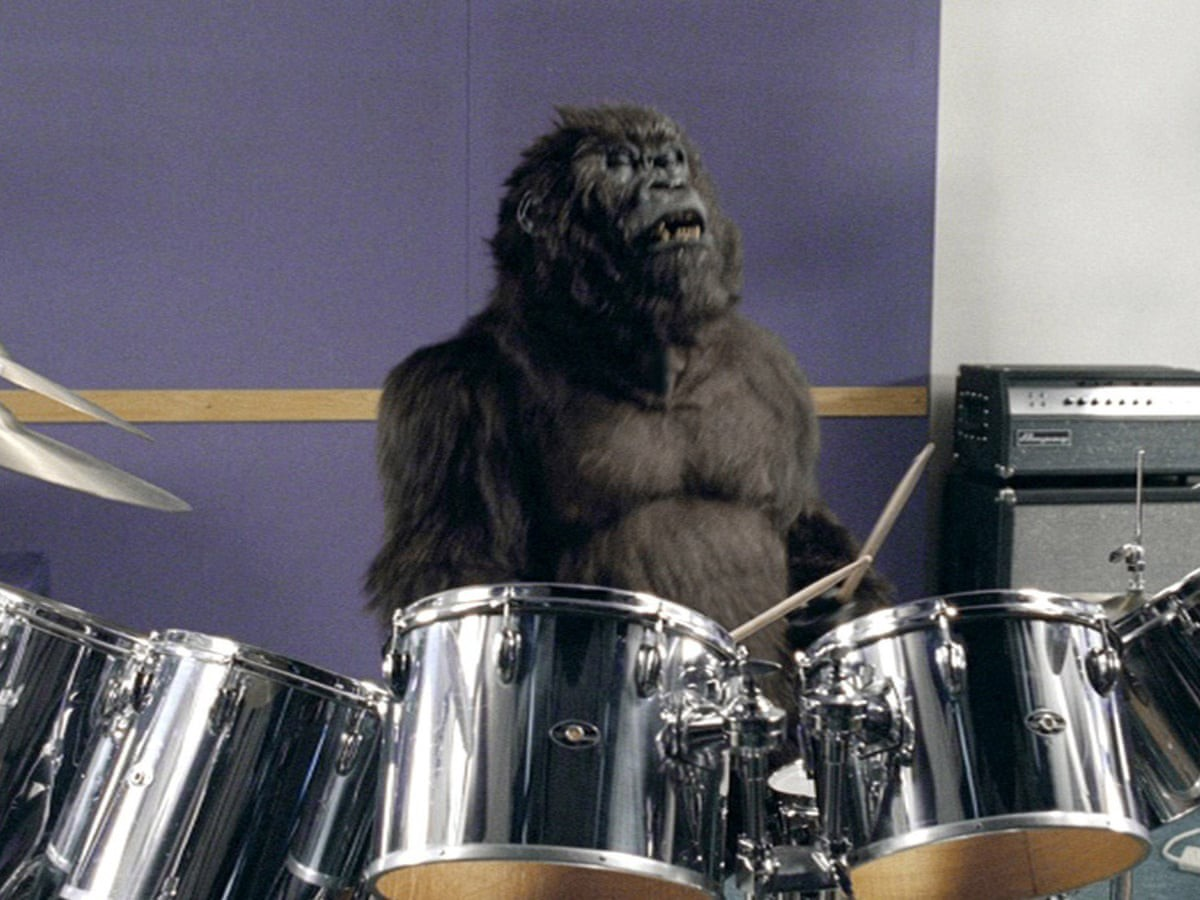 A gorilla is playing the drums. Behind him is a purple background and an amplifier.